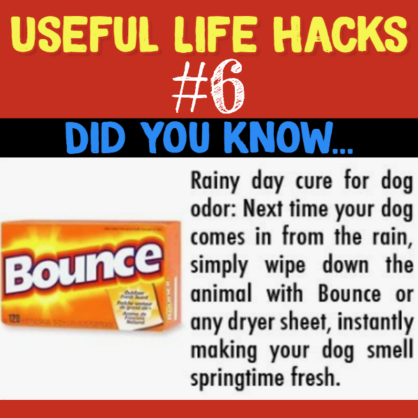 Does your dog stink? Try this. Useful life hacks to make life easier - household hacks... MIND BLOWN!