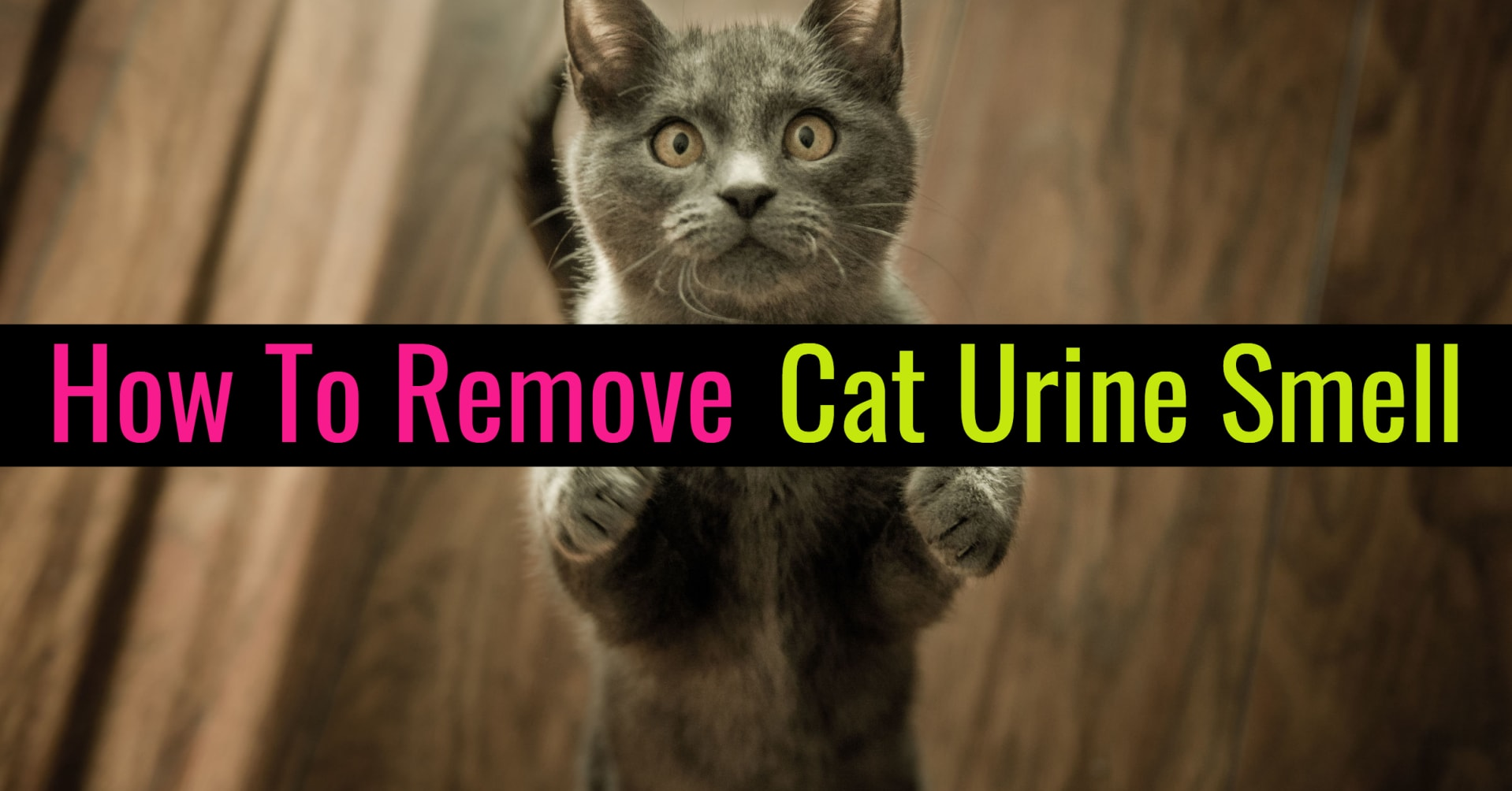 how to remove cat urine pee smell